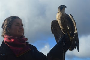 Ffion and peregrine