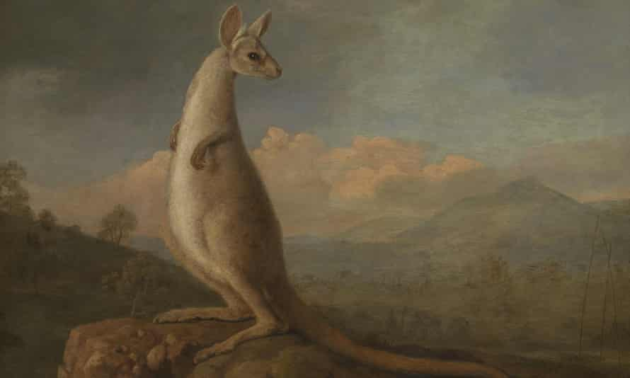 The Kongouro from New Holland,  1772 by George Stubbs.