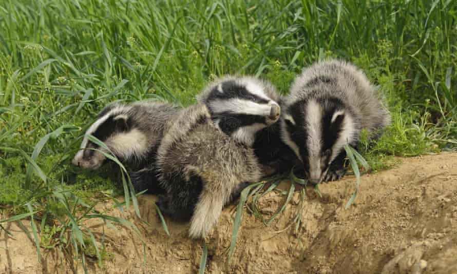 If you are angry about a big issue that's in the news, such as the badger cull, you might find that one of the national conservation charities already has a campaign about it that you can join.