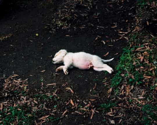 Regine Petersen's Dog (Impact Site 1) from the Alabama chapter of Find a Fallen Star.