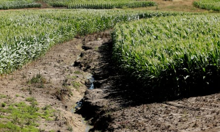 This Iowa cornfield shows signs of erosion and fertilizer runoff. Climate Corporation claims its analyses help farmers make more efficient decisions about seed, water use and fertilizer.