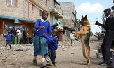 Scared school children walk past a police dog during a crackdown on Mungiki sect adherents in Kosovo slum in Nairobi; Kenya. The sect is blamed for a string of recent murders and beheadings. The slum was believed to be a major hideout for the quasi-religious turned militant sect members.
