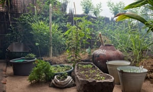 Permaculture in Malawi: using food forests to prevent floods ... on modern garden design, veggie garden design, herb garden design, landscape design, companion planting garden design, high tunnel garden design, vegetable garden design, horticultural therapy garden design, water garden design, simple house garden design, forest garden design, bioretention garden design, swale garden design, bioshelter design, livestock garden design, xeriscape garden design, home garden design, keyhole garden design, cutting flowers garden design, sustainable garden design,