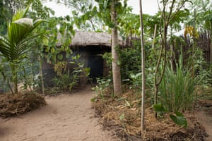 African Moringa and Permaculture Project's household permaculture gardens