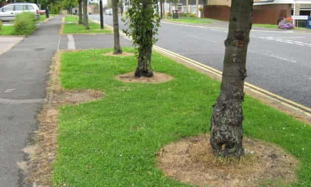 Dead grass suggests pesticide spraying in Newcastle.