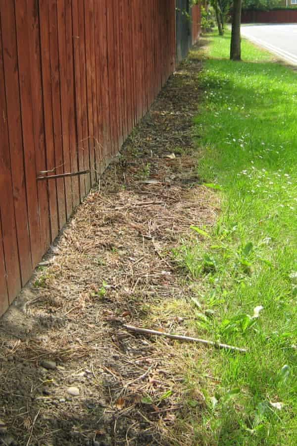 Glyphosate pesticide use in Newcastle.