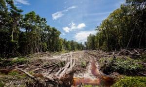 palm oil plantation in Trumon subdistrict, Aceh province, on Indonesia's Sumatra island.