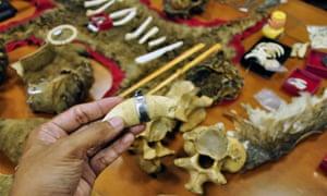 Illegal trade in endangered wildlife thriving on eBay