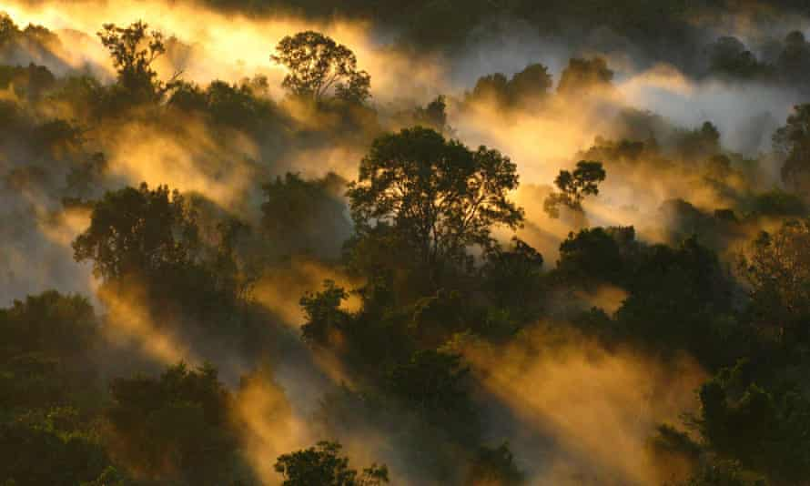 The Amazon rainforest canopy at dawn in Brazil