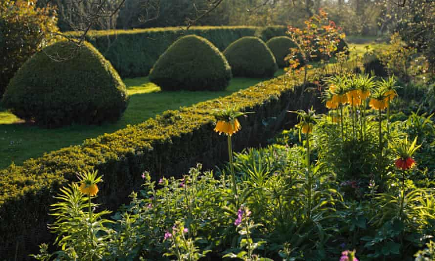 Late afternoon sun on hedges and flowers in an English country garden.