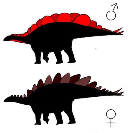 Hypothetical silhouettes of a male (top) and female <em>Stegosaurus</em><em> mjosi</em> based on the anatomical survey.