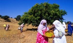 Morocco, Ait Baha, argan gathering at Ait Baha