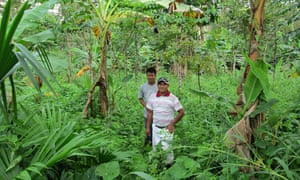 The Panama enterprise aims to turn plots of deforested land into sustainable tropical ecosystems.