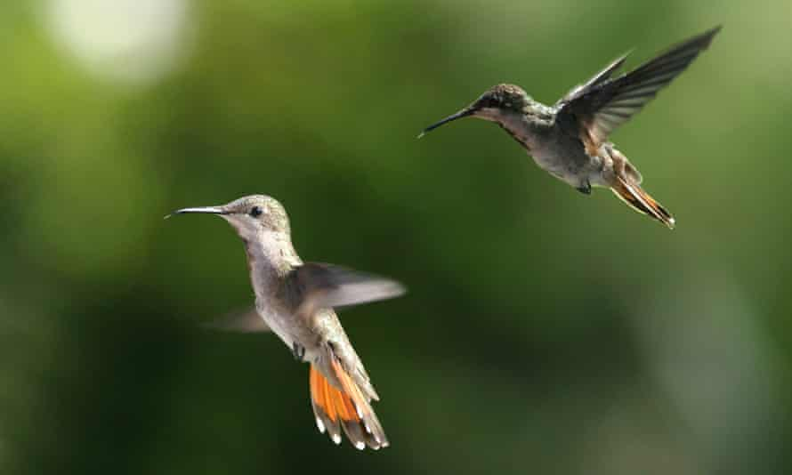 Trinidad is rich in fauna, much of which it shares with South America. It's a popular destination for birdwatchers.