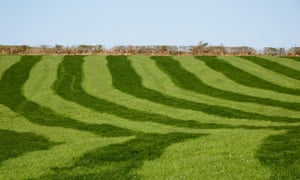 Freshly rolled Improved pasture with not a wild flower in sight, but bright green and striped like a well mown lawn