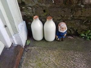 Fresh Milk My neighbour has a little helper keeping an eye on his milk
