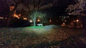 In this photo taken the morning of April 22, 2015, and released by the 24th Precinct of the New York City Police Dept., on Thursday April 23, 2015, a coyote walks in New York City's Riverside Park, on the Upper West Side of Manhattan. While the animals have been spotted periodically in New York since the 1990s and have taken up residence in some Bronx parks, a string of sightings and captures in Manhattan and other unexpected locales in recent months has drawn new attention to them. And experts expect to see more of the adaptable animals in the nation s biggest city.