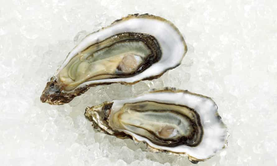 European native oysters are a flatter and more delicate species than the Pacific oysters farmed almost everywhere