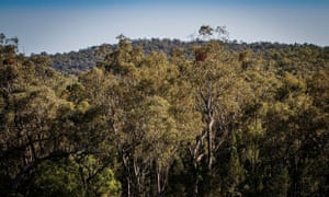 Leard state forest in NSW
