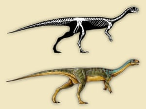 A reconstruction of the skeleton and external appearance of Chilesaurus.
