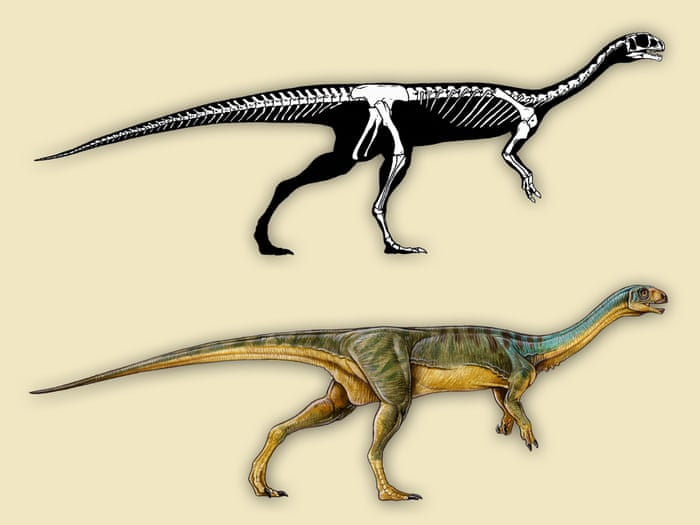 A reconstruction of the skeleton and external appearance of Chilesaurus. Paleontologists have labelled it 'a truly odd mix'. Illustration: Gabriel Lío