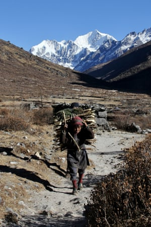 An Old Single Lady is collecting Fire Wood for livelihood
