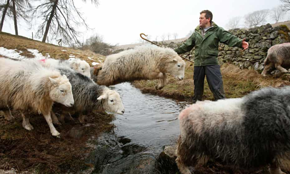 Writer and farmer James Rebanks, with his Herdwick sheep at Racy Ghyll Farm, Penruddock, Penrith, Cu