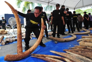 Thai customs officials display seized ivory at Thai Customs headquarters in Bangkok, Thailand in April