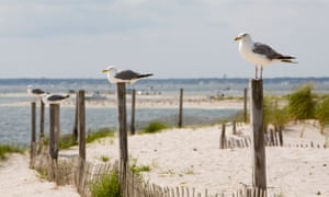 Gulls perch on top of posts at Island Beach State Park