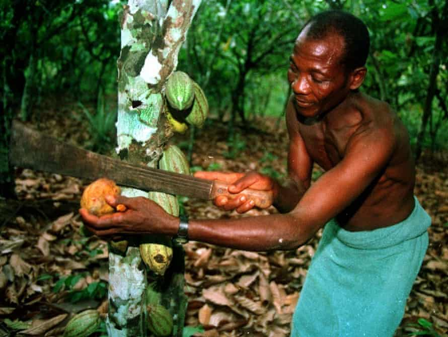Farmer Gambi Gbanble on his cocoa plantation in Ivory Coast.