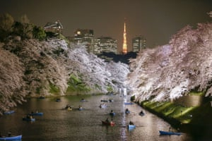 People row boats under the cherry blossom on the Chidorigafuchi moat in Tokyo. The meteorological agency in Japan announced that cherry blossoms were in full bloom five days earlier than average due to the warm weather in the country
