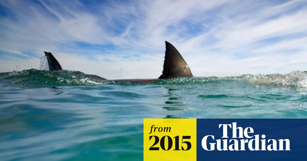 Man Bitten In Fifth Shark Attack In North Carolina In Two Weeks Sharks The Guardian