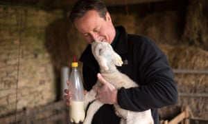 PM David Cameron feeds orphaned lambs on Dean Lane farm near the village of Chadlington.
