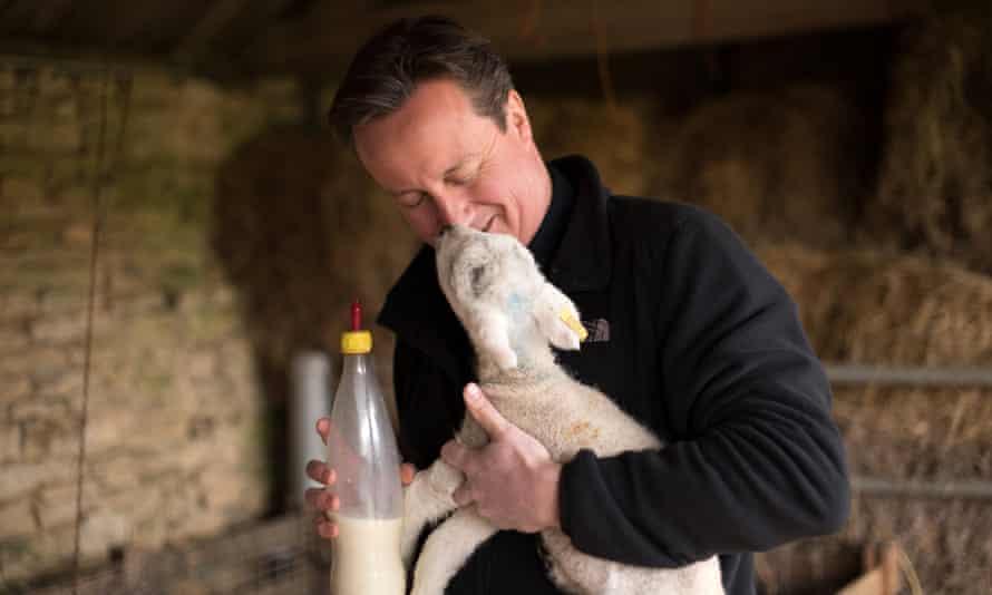 David Cameron feeds orphaned lambs on Dean Lane farm near Chadlington, Oxfordshire.