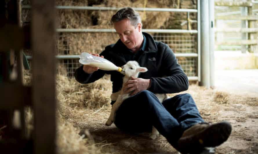 David Cameron feeds an orphaned lamb