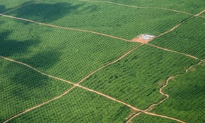 Aerial photos of the oil palm plantation owned by Biodiesel Ucayali SRL. #2 is the more northernly of the two plantations in the area.