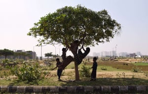 Children of nomadic shepherds play on a tree in Faridabad