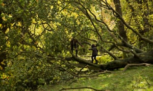 Two brothers play on a tree that was blown over on Hampstead Heath in a storm.