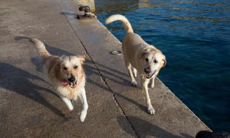 Two happy wet dogs