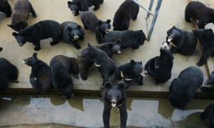 Is the end of 'house of horror' bear bile factories in sight