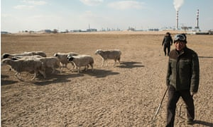 Mongolian herder with sheep near coal-to-gas plant