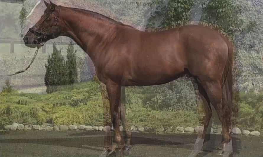Horse (detail), by John Stezaker
