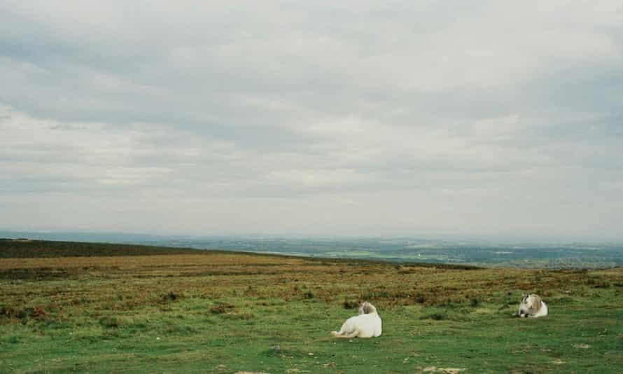 Panoramic by Richard Billingham