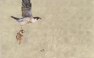 Falcon hunt cut