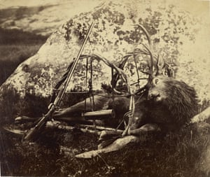Dead Stag in a Sling, 1850s-60s, Horatio Ross, albumen silver print