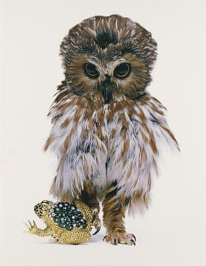 David Webb, Jeweled Toad, New York, 1963, Hiro (Yasuhiro Wakabayashi), dye imbibition print