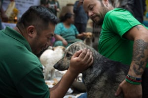 Humane Society International staff take part in the terva ritual, a break after exhausting days working in remote villages hit by the quake.