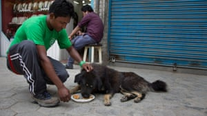 Humane Society International say street dogs haven't been badly affected by the earthquake. The main concern is cows and goats.