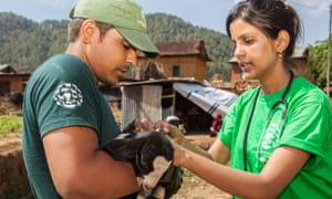 HSI disaster responders give veterinary attention to a goat after an earthquake in Nepal