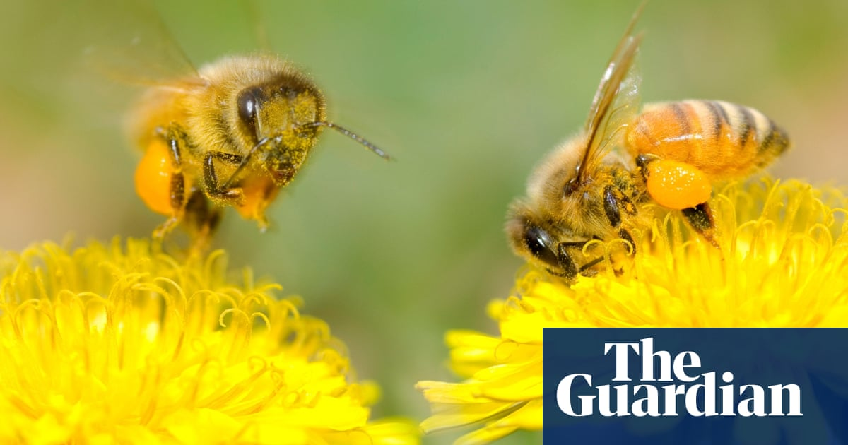 Let Dandelions Grow Bees Beetles And Birds Need Them Life And